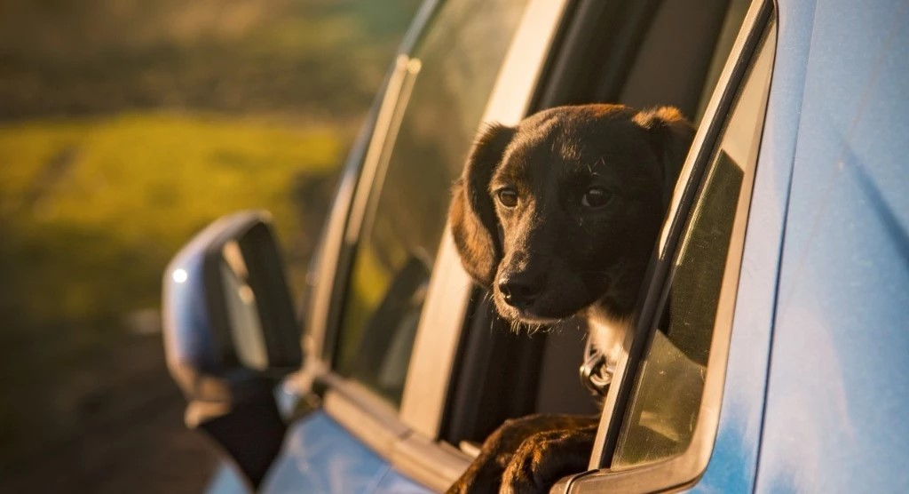 The Basics of Traveling With Pets